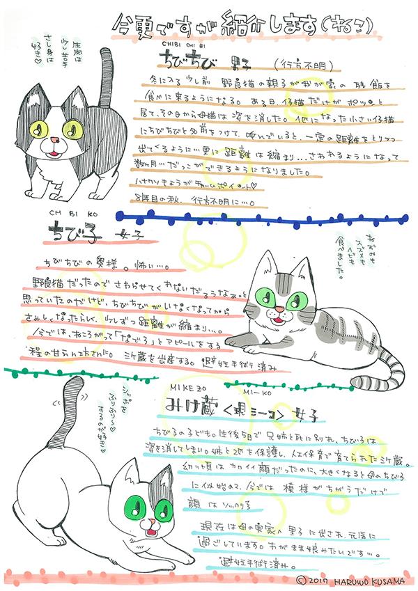shoukai-cat
