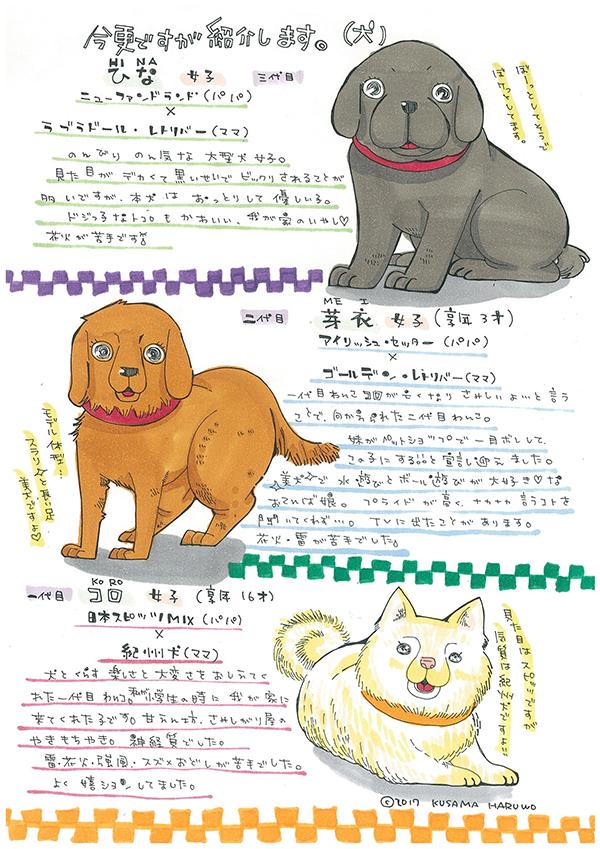 shoukai-dog